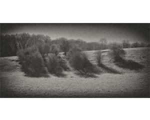 Série Arbres, 2014. Numérique,Tirage encre pigmentaire sur papier coton, 25,6 x 51,2 cm.