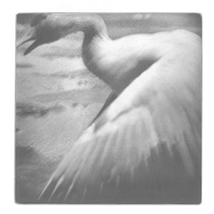 Swan, 2013. Héliogravure, 28,5 cm x 26 cm .